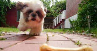 shih tzu dog treats