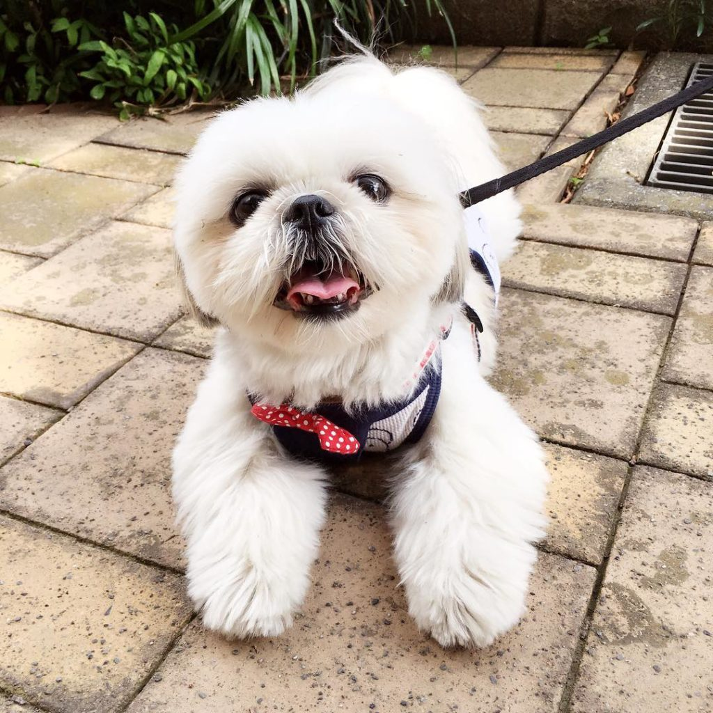 perfect dog harness